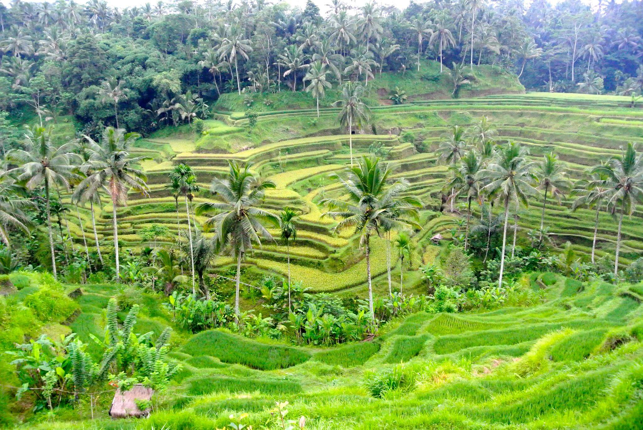 yoga retreat in Bali, Ubud